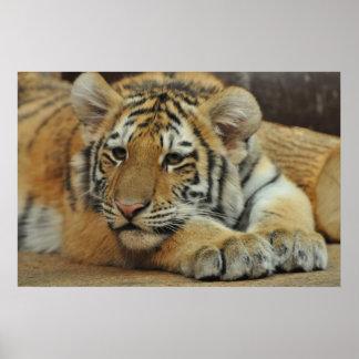 Amur Tiger Cub Poster