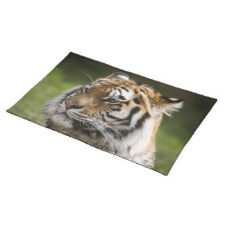 Amur Tiger Place Mat