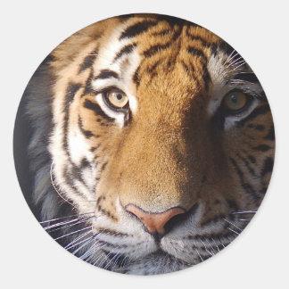 Amur Tiger Round Sticker