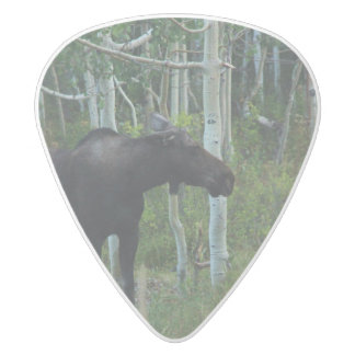 an Alaskan Moose walks around in an Aspen Forest White Delrin Guitar Pick