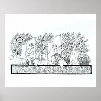 An ancient Egyptian garden (engraving) (b/w photo) Poster