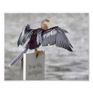 An Anhinga Bird Drying Their Wings Out Photo Print