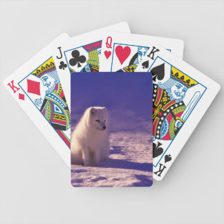 An Arctic Fox in Norway Bicycle Playing Cards