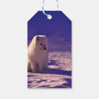 An Arctic Fox in Norway Gift Tags