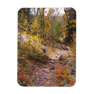 "An Autumn Walk - 3"" x 4"" Magnet"