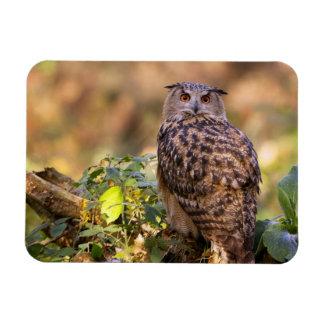 An Eagle Owl Magnet