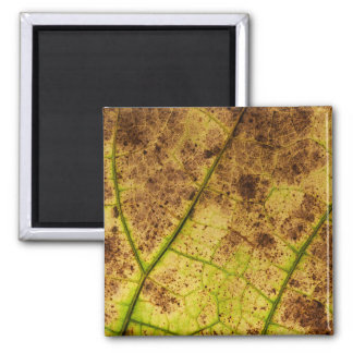 An Earthy Yellow and Brown Leaf Macro Image Fridge Magnets