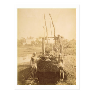 An Egyptian Irrigation Machine on the Banks of the Postcard