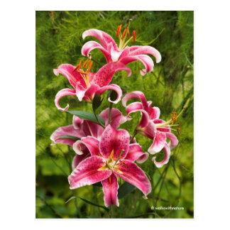 An Elegant Quintet of Stargazer Oriental Lilies Postcard
