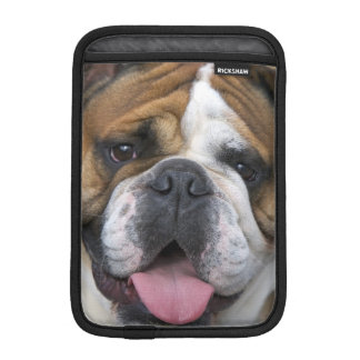 An english bulldog in Belgium. Sleeve For iPad Mini