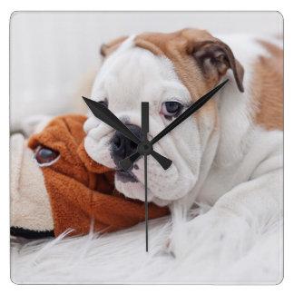 An English Bulldog Puppy Playing With A Bulldog Wall Clocks
