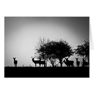 An image of some deer in the morning mist card