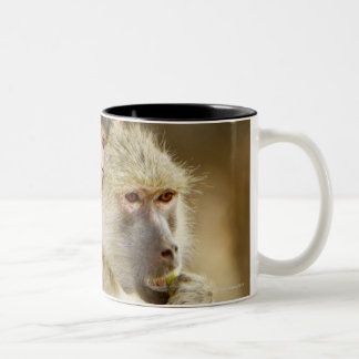 An infant Yellow Baboon(Papio Two-Tone Coffee Mug