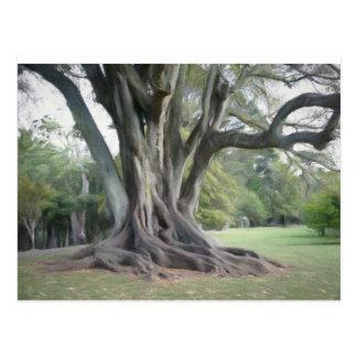 An Old Tree Postcard