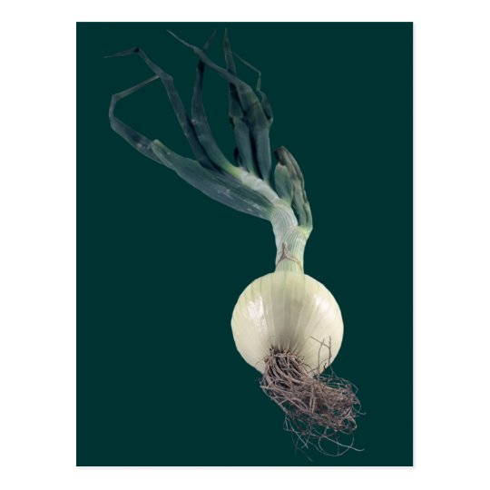 An Onion Postcard