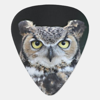 An Owl's Stare Guitar Pick