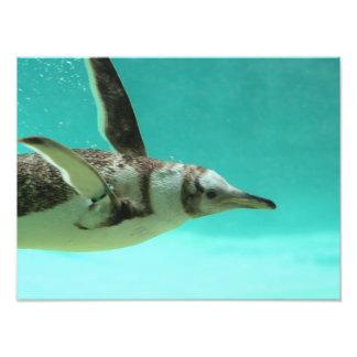 An Underwater Penguin Art Photo