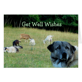 Anatolian & grazing goats- customize any occasion greeting card