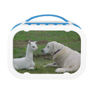 Anatolian Shepherd And Alpaca Cria Lunch Box