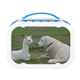 Anatolian Shepherd And Alpaca Cria Lunch Boxes
