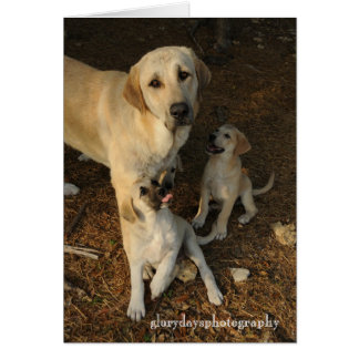 Anatolian Shepherd dog and pups Card