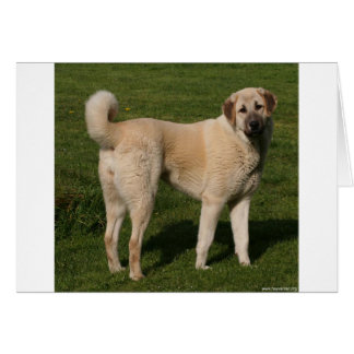 Anatolian Shepherd Dog Card