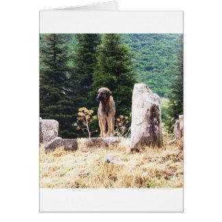 Anatolian Shepherd Dog  photograph taken at Ephesu Greeting Card