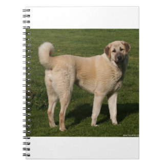 Anatolian Shepherd Dog Spiral Notebooks