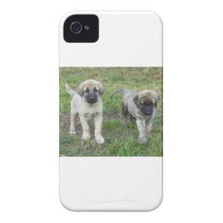 Anatolian Shepherd Puppies Dog iPhone 4 Case-Mate Case