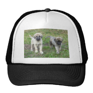 Anatolian Shepherd Puppies Dog Trucker Hat