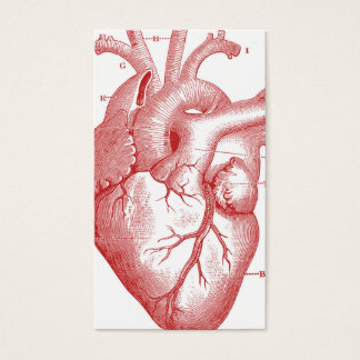 Anatomical Heart Profile or Business Card