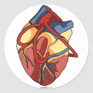 Anatomical Heart Round Sticker
