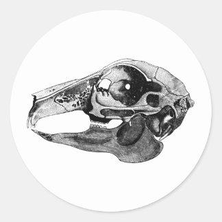 Anatomical Rabbit Skull Black and White Round Sticker