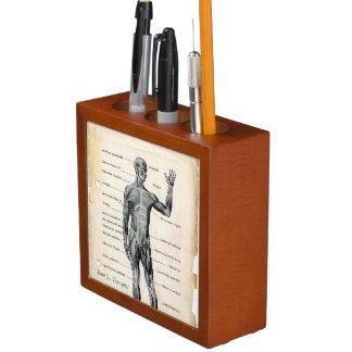Anatomy Anterior and Posterior Vintage Drawings Desk Organizer