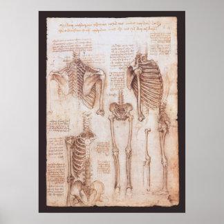 Anatomy Drawings Human Skeletons Leonardo da Vinci Poster