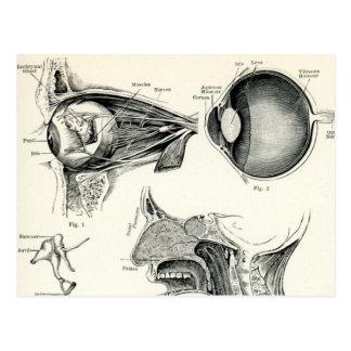 Anatomy - Human Senses Postcard