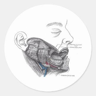 anatomy mouth classic round sticker