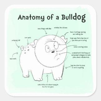 Anatomy of a Bulldog Square Sticker