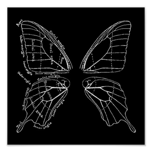 Anatomy Of A Butterfly Wing Vintage Diagram Poster
