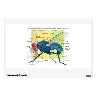Anatomy of a Housefly Diagram Musca Domestica Wall Sticker