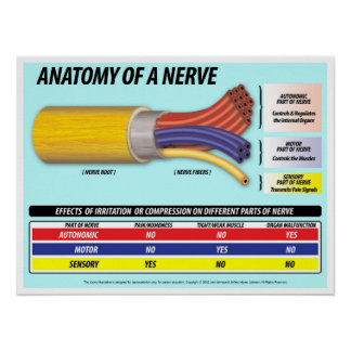 Anatomy of a Nerve 2016 Edition Poster