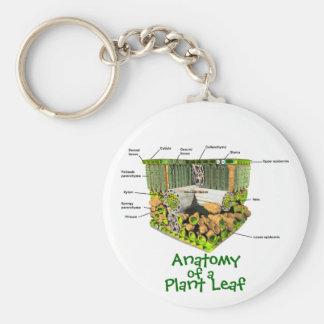Anatomy of a Plant Leaf key chain