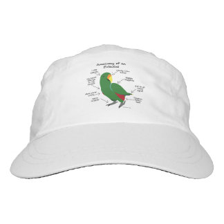 Anatomy of an Eclectus Hat