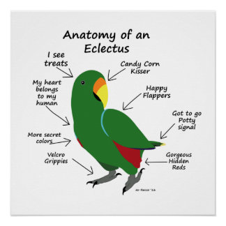 Anatomy of an Eclectus Poster
