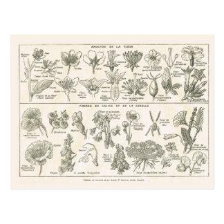 Anatomy of flowers postcard