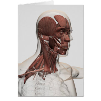 Anatomy Of Male Facial And Neck Muscles, Front Card
