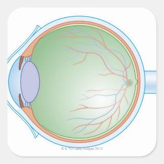 Anatomy of the Human Eye Square Sticker