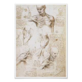 Anatomy of the Shoulder, Leonardo da Vinci Poster