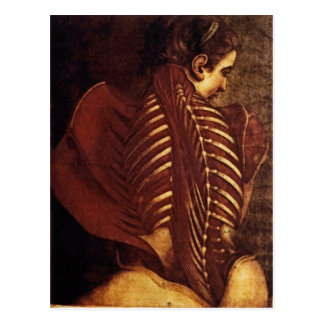 Anatomy/Skeletal of Female Back Postcard