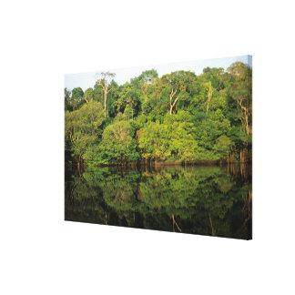 Anavilhanas, Amazonas, Brazil. Rainforest river Stretched Canvas Print